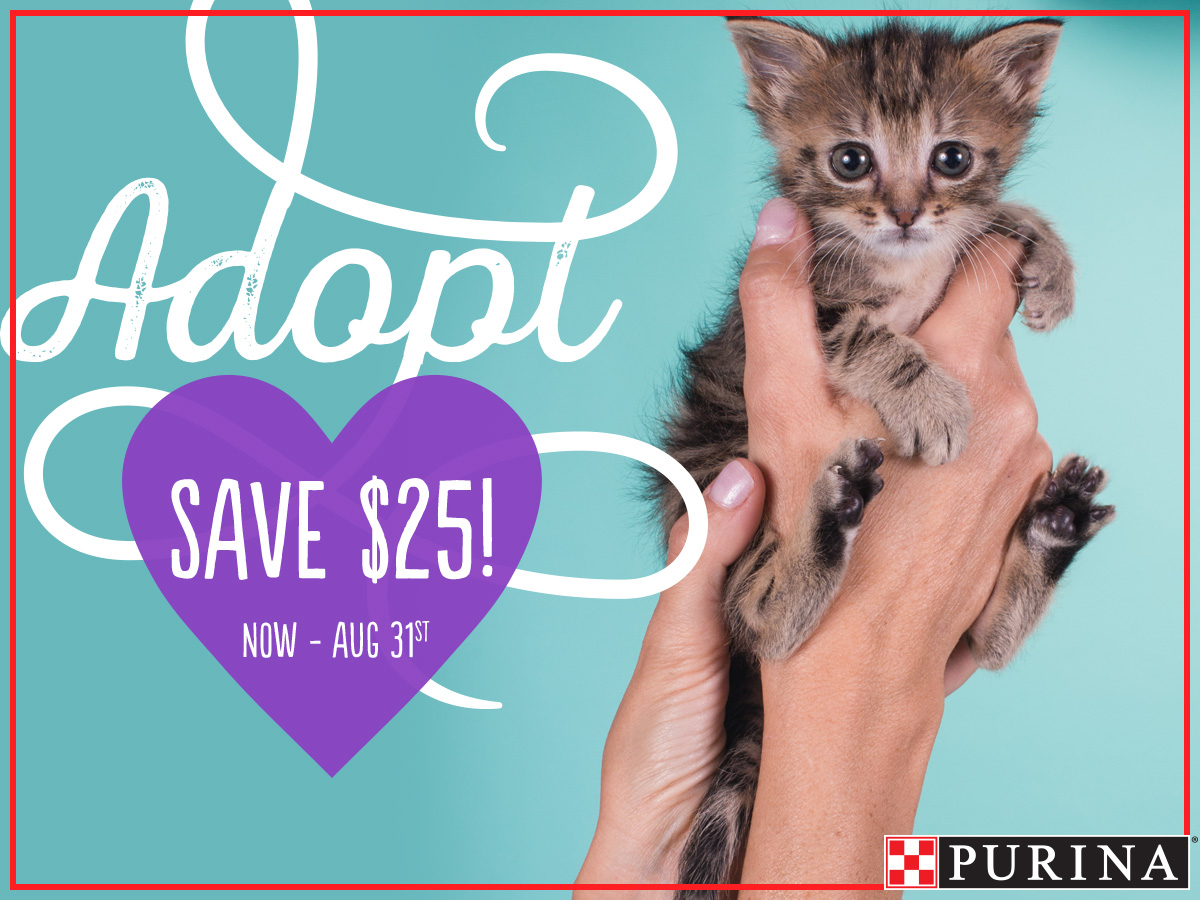 Adopt and Save $25 image
